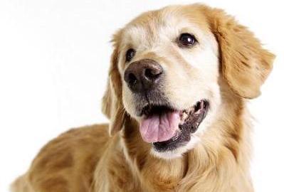 Cani per appartamento ~ Decora la tua vita