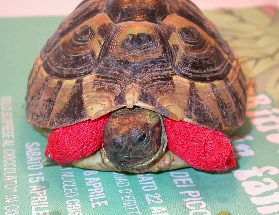 Topi e ratti un pericolo per le tartarughe pets vets for Termoriscaldatore per tartarughe