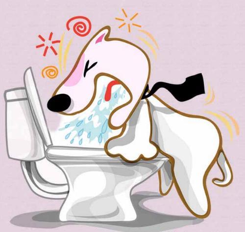 cane vomita
